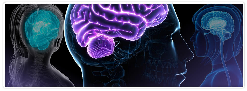 brain_curriculum_banner1